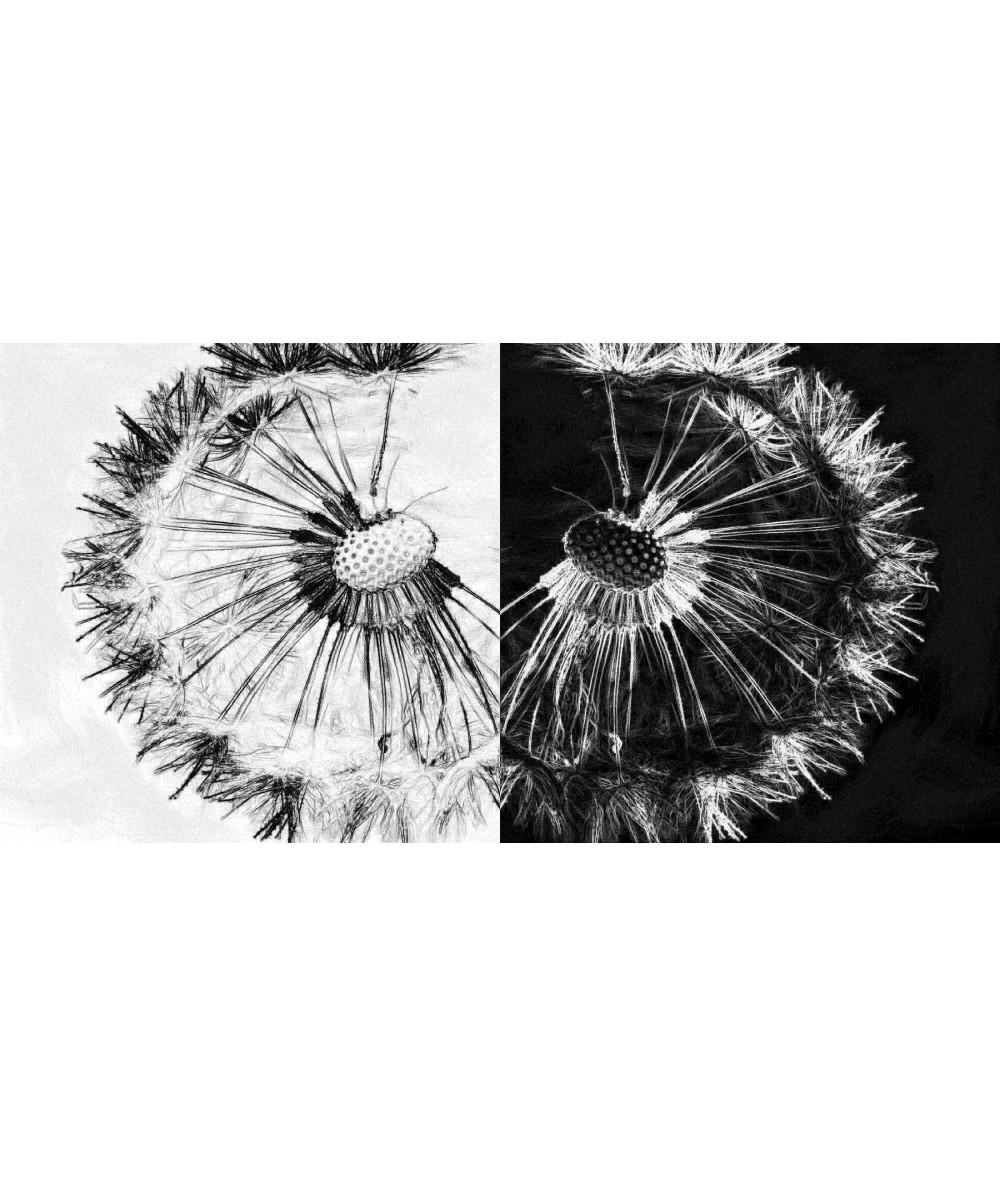Obraz na płótnie Obraz czarno biały Dwa dmuchawce (2-częściowy)