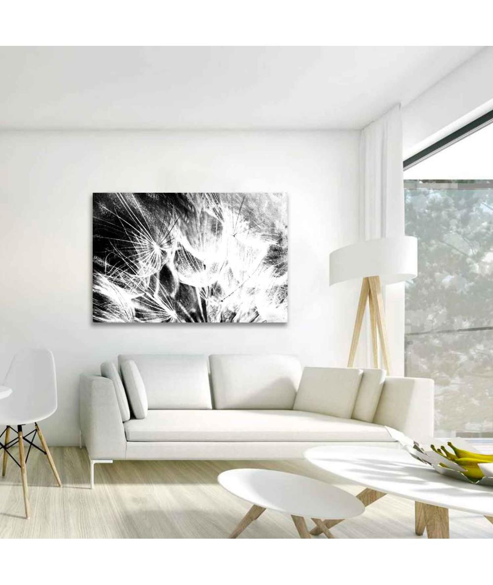 Obraz plakat Dmuchawce czarno białe (1-częściowy) szeroki