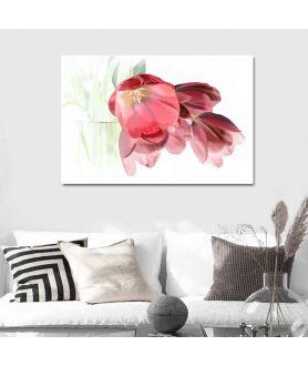 Obraz na białym tle Tulipany romantyczne