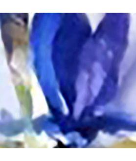 Kwiaty plakat na ścianę Irysy jak motyle