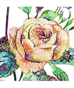 Plakat róża w ramie Rysunek róży
