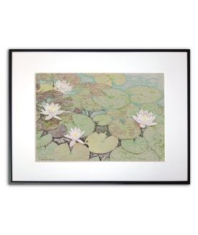 Plakat białe kwiaty na stawie Lilie na wodzie