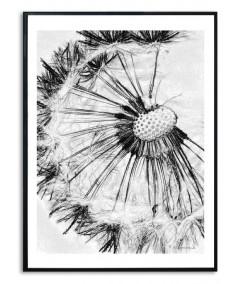 Obrazy dmuchawce - PLAKAT NA ŚCIANĘ - PLAKAT DMUCHAWIEC NA ŚCIANĘ - BIAŁY DMUCHAWIEC