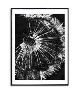 Obrazy dmuchawce - PLAKAT NA ŚCIANĘ - CZARNY PLAKAT NA ŚCIANĘ - CZARNY DMUCHAWIEC