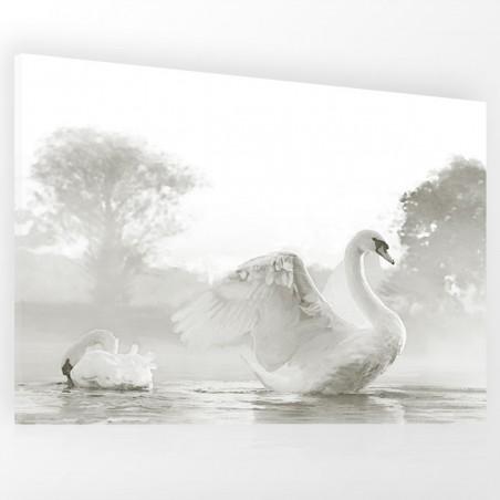 Obraz na płótnie Obraz z łabędziami Piękne łabędzie