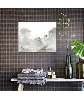 Obraz plakat dekoracyjny Piękne łabędzie