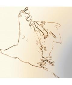 Obraz na płótnie Obraz na ścianę ptaki Żurawie w locie