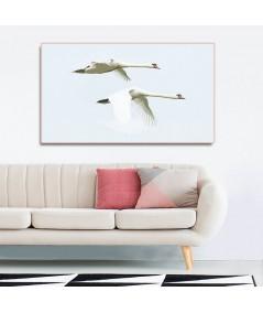 Obraz plakat dekoracyjny Dwa łabędzie