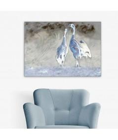 Obraz plakat dekoracyjny Żurawie niebieskie