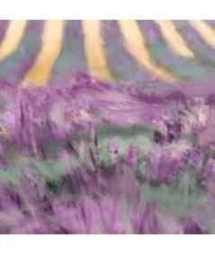 Obraz na ścianę Pole lawendy (1-częściowy) szeroki