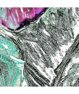 Obrazy natura - Obraz z liściem Tropikalny liść (pionowy)