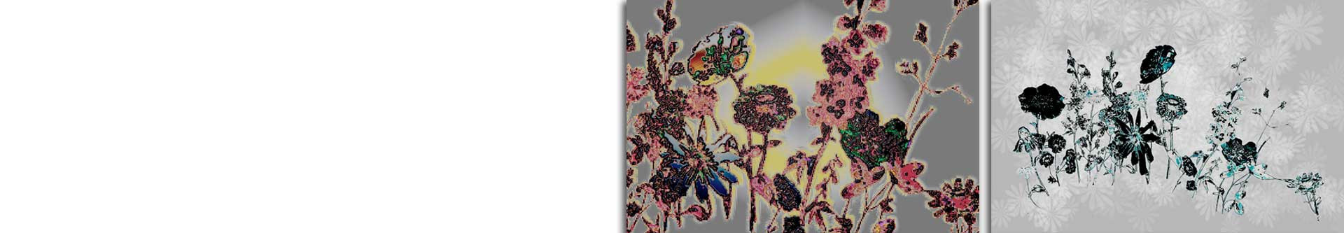 Obrazy łąka Obrazy zioła • Grafiki Obrazy