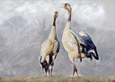 Obrazy plakaty zwierzęta - GrafikiObrazy.pl